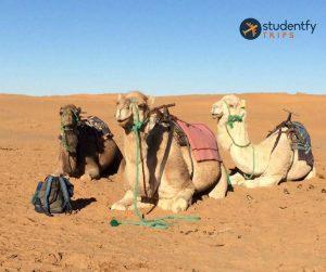 Morocco (14)
