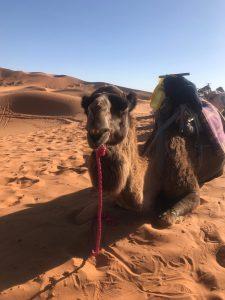 Morocco (21)